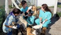 Gönüllü hayvan bakımı için yeni adım