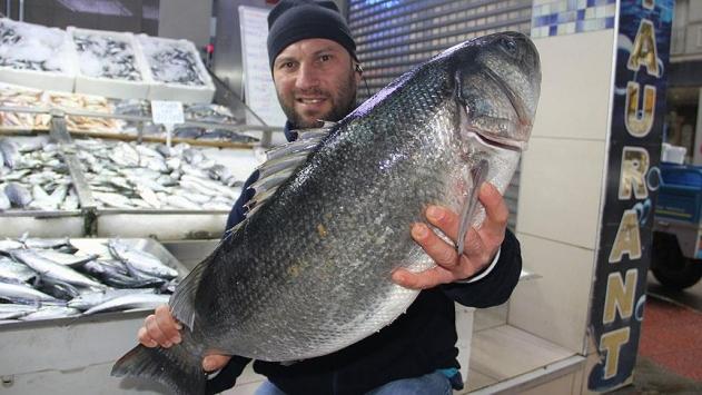 Karadenizde 8 kiloluk levrek balıkçıların ağlarına takıldı