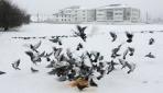 Bolu'da sokak hayvanları unutulmadı
