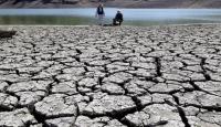 Californiada kuraklık milyonlarca ağacı yok etti