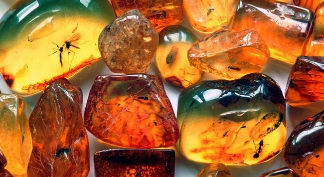 Kehribar taşında 99 milyon yıllık fosil bulundu