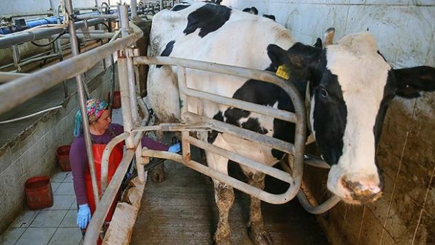 Sütün litre fiyatında artış