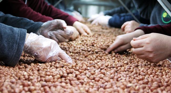 En fazla fındık ihracatı İtalyaya
