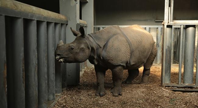 Türkiyenin gözde hayvanat bahçesi Canlı gen bankası