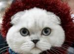 Kedilerin Yarışmasından Kareler