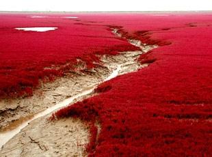 Nehir Kızıla Boyanmış Gibi