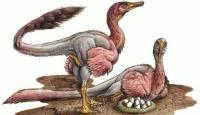 Kuşa Benzeyen Dinazor Fosili Bulundu