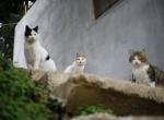 """Sokak kedileri için """"köy"""" kurdular"""