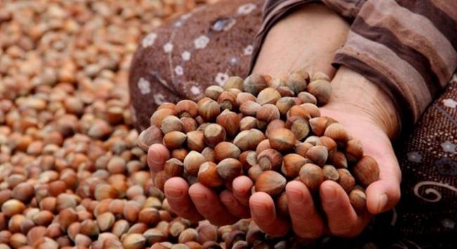 Bakan Fakıbabadan fındık üreticisine müjde