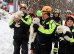 İtalyada çığdan kurtarılan yavru köpekler