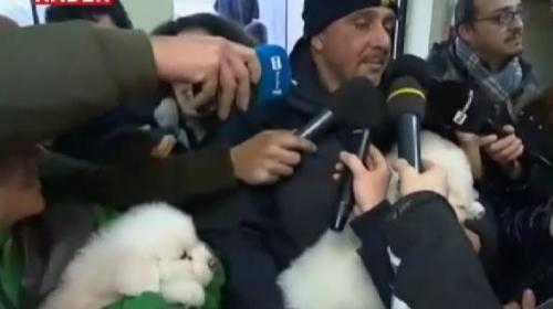 Çığ enkazından çıkarılan yavru köpekler