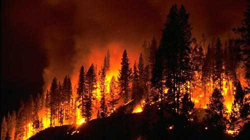 Avustralyada orman yangınları