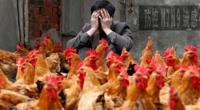 Çinde kuş gribinden 106 kişi hayatını kaybetti