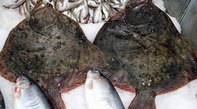 Kalkan balığının kilosu 130 liraya çıktı
