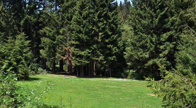 Türkiyede orman varlığı 22 milyon hektara yükseldi