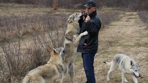 Evcilleştirdiği kurtlarla aynı evde yaşıyor