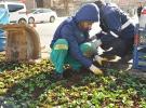Diyarbakır'da 5 bin 200 çiçek dikildi