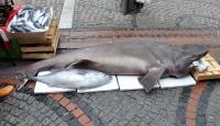 Edirne'de Dev Balık Yakalandı
