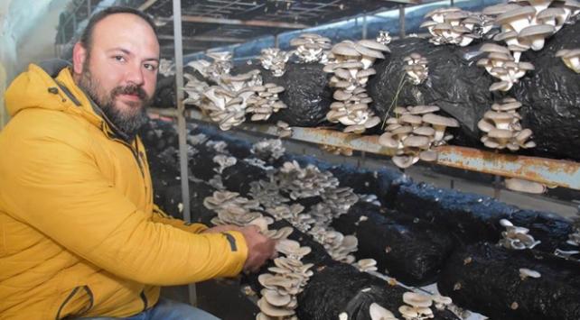 Mühendisliği bıraktı ayda 14 ton istiridye mantarı üretiyor