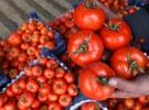 Rusya, domates alımında tarihi değiştirdi