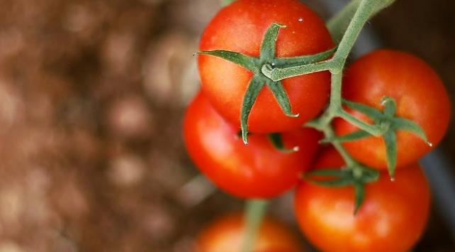 İhraç edilemeyen domates yeni pazarlar buldu
