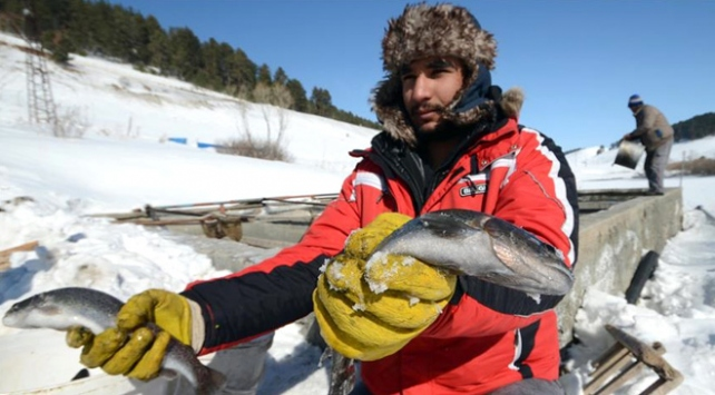 Doğu'da dondurucu hava balık tesislerini vurdu