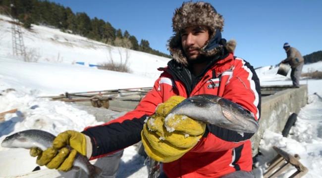 Doğuda dondurucu hava balık tesislerini vurdu