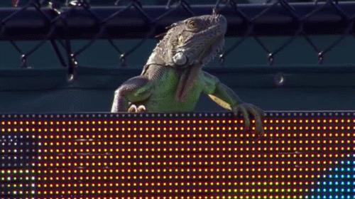 Miami Açık Tenis Turnuvası ilginç bir ana sahne oldu
