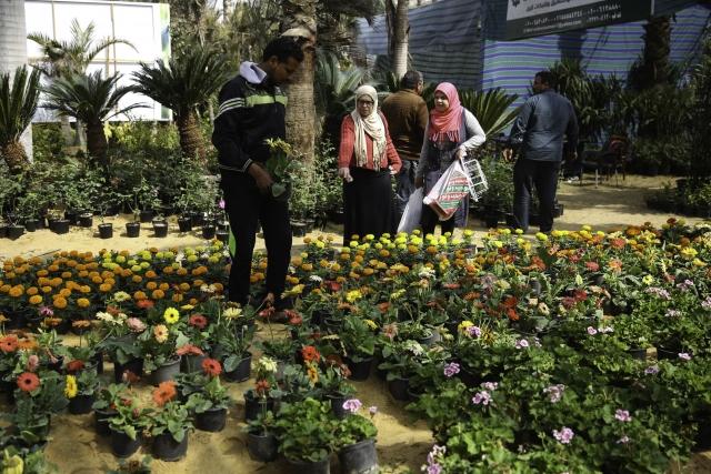 Mısır Çiçek Pazarı Açıldı