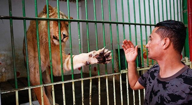 Udey Saddamın aslanları ayrıcalıklı günlerini arıyor