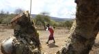 Kenyadaki kuraklık