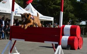 Jandarmanın eğitimli köpekleri ilgi gördü