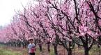 Bursada ilkbahar