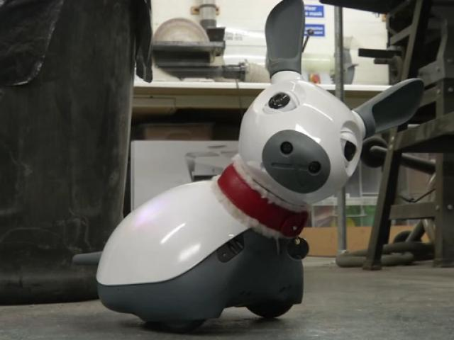 Yalnızlık çekenlerin yeni arkadaşı evcil robot Miro