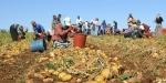 Mevsimlik tarım işçilerinin yaşadığı sorunlar giderilecek
