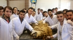 Ölen aslan eğitim materyali olacak
