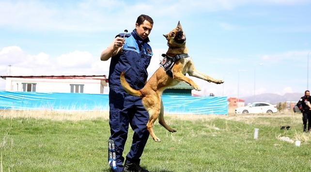 Narkotik köpekler uyuşturucu tacirlerinin korkulu rüyası