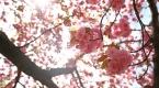 New Yorkta ilkbahar
