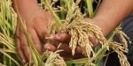 Tarımsal destek ödemeleri için fark ödemesi uyarısı