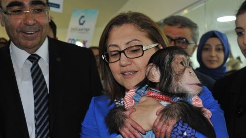 Şempanze Canın Başkan Şahine oyunu