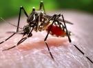 Dünya genelinde 212 milyon kişi bu hastalığa yakalanıyor!