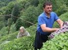Yaş çayda taban fiyat açıklaması