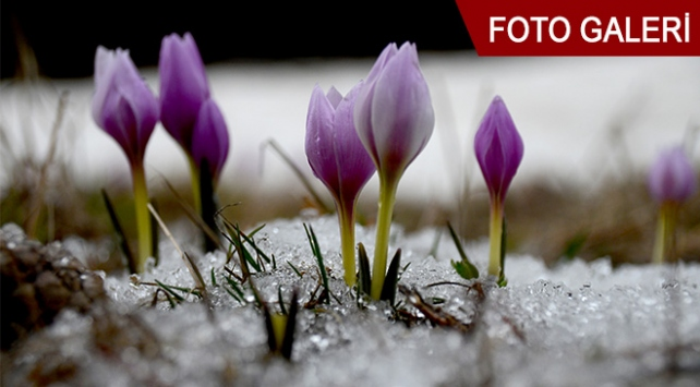 Karlar erimeden ilkbahar gelmiyor