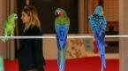 PetZoo Ankara Evcil Hayvan Ürünleri Fuarı açıldı