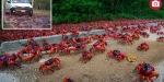 Küba'da büyük kırmızı göç başladı