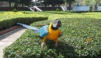 Kaybolan Papağan Polise Adresini Söyledi