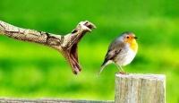 Çarpıcı Hayvan Fotoğrafları