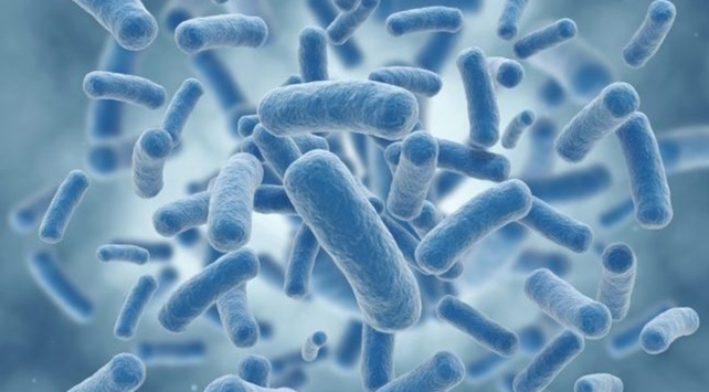 Probiyotikler hastalıkların gelişimine engel oluyor