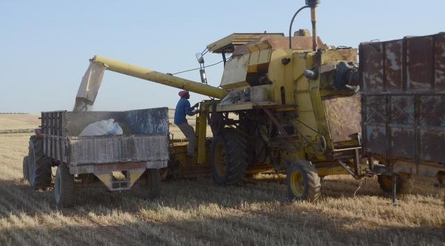 Fırat Kalkanıyla terörden temizlenen bölgelerde şimdi hasat zamanı