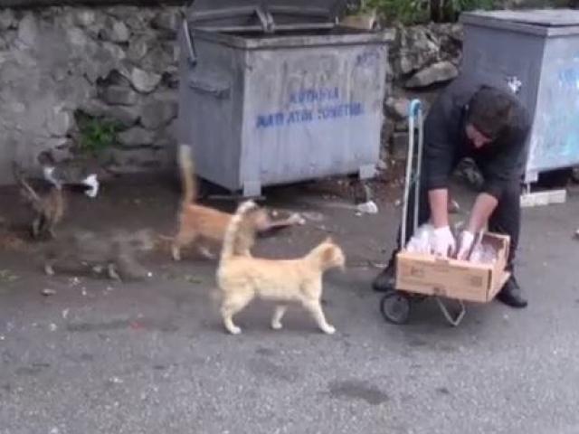 Okul harçlığı ile 300 kediyi besliyor